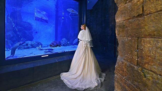 Istarski Festival Vjenčanja obilježava siječanj 2019.